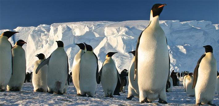 pinguini-polul-sud